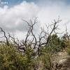 cliffdwellings_4746
