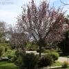 march-sunday_9063
