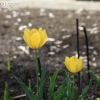 march-sunday_9071