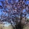 march-sunday_9173