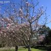 march-sunday_9184