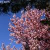 march-sunday_9188