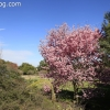 march-sunday_9190